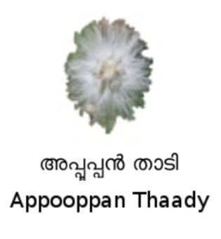 Image of the Appooppan Thaady flower.